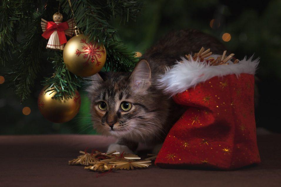 Karácsony cicával